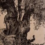 Δημήτρης Κρέτσης_Γέρικη ελιά_σινική μελάνη σε χαρτί_40x30 cm